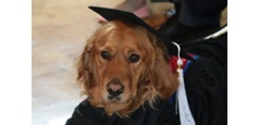 Goldie the Guide Dog, Geared Up in Graduation Gown